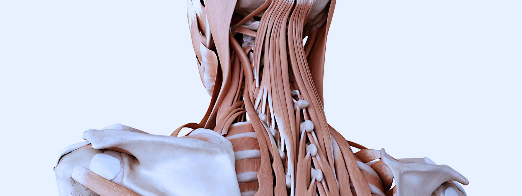 cervicobrachialgie tension musculaire - Blogue du Réseau