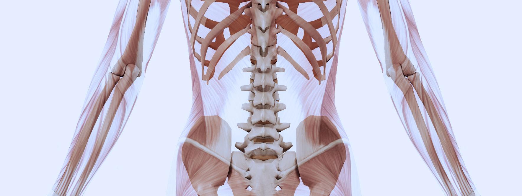 Quels muscles peuvent en être la cause? Blogue du Réseau