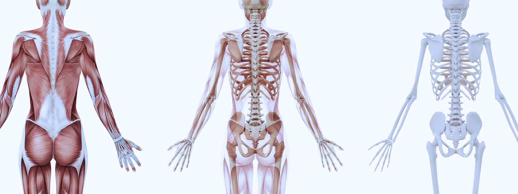 Applications anatomie muscles et os - Blogue du Réseau