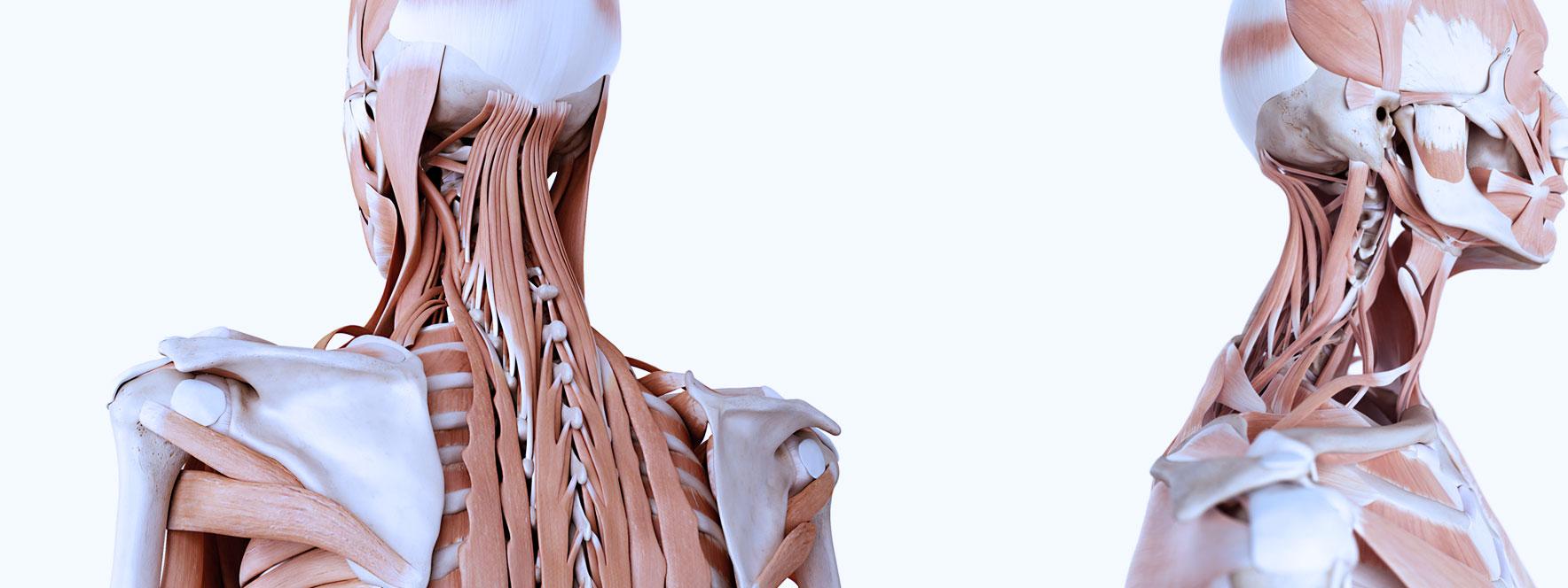 Flexxion cervicale - Combattre la gravité - Blogue du Réseau