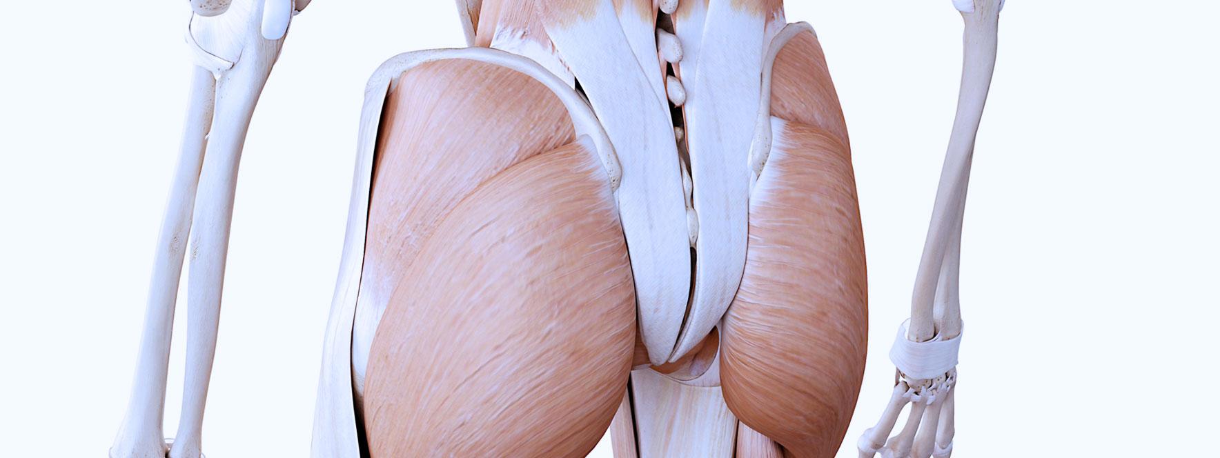 Les générateurs de douleur sacro-iliaque - Blogue du Réseau