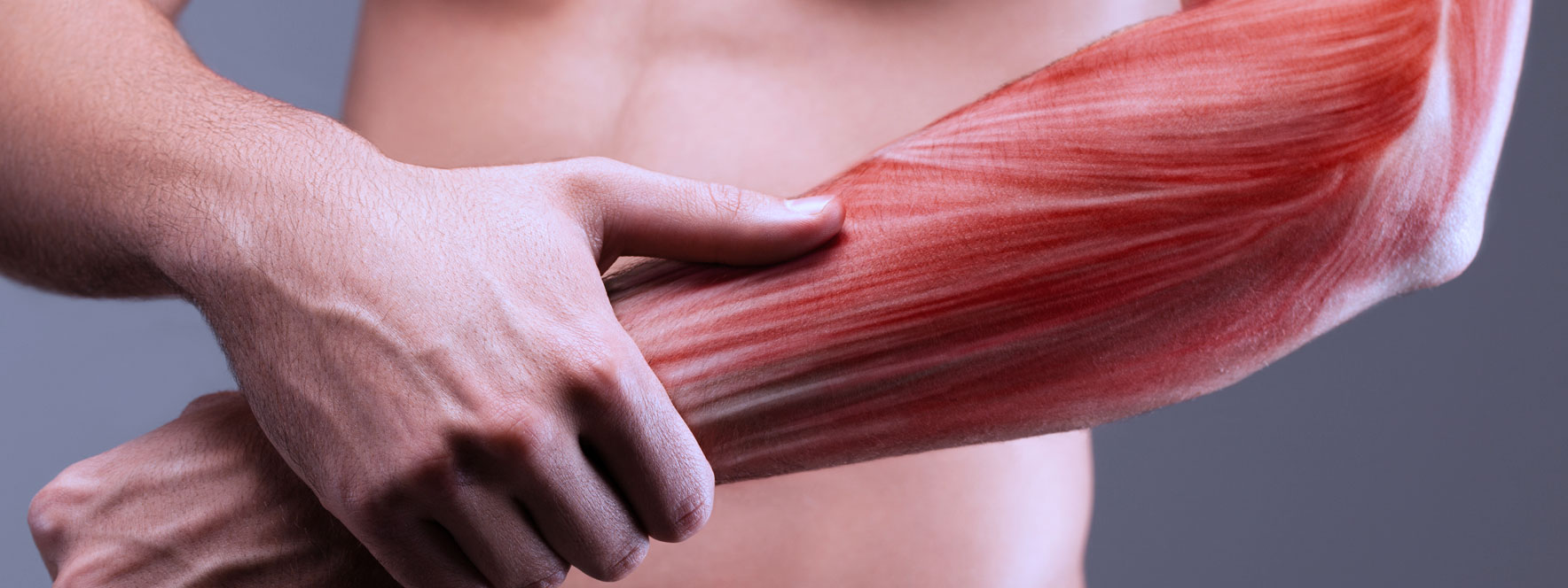 muscle massothérapie blogue du Réseau