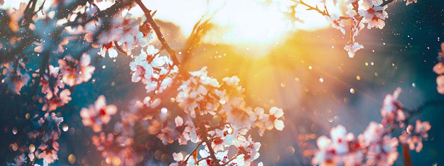 La massothérapie au temps du printemps - Blogue du Réseau