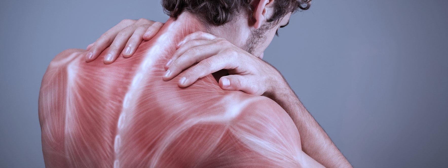 Mécanismes qui assomment vos muscles - Blogue du Réseau